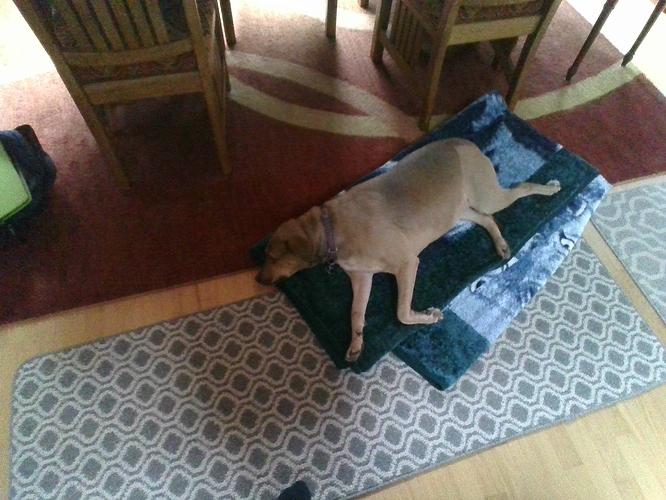 ebicdog
